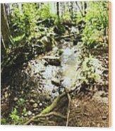 Stream At Devonian Park Wood Print