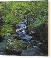 Stream Flowing Through A Forest Wood Print