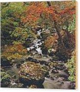 Stream Near Glengariff, Co Cork, Ireland Wood Print