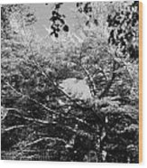 Streched Trees In Black And White Wood Print