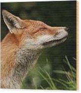 Stretching Fox Wood Print by Jacqui Collett
