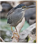 Striated Heron Wood Print by Fabrizio Troiani