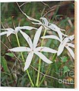 String Lily Wood Print