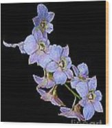 String Of Light Blue Orchids Wood Print