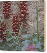 Strings Of Tomatoes Dry On A Wall Wood Print by Tino Soriano