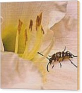 Striped Beetle On Lilly 1 Wood Print