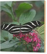 Striped Butterfly Wood Print