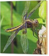 Striped Dragonfly Wood Print