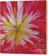 Striped Flaming Tulips. Hot Pink Rio Carnival Wood Print