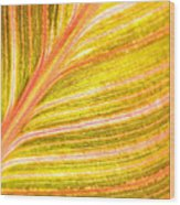 Striped Leaf Wood Print by Bonnie Bruno