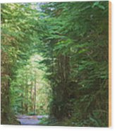 Stroll Through The Quinault Rain Forest Wood Print