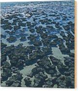 Stromatolites Wood Print by Dirk Wiersma