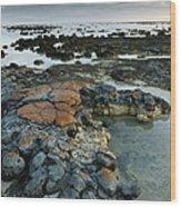 Stromatolites In Australia Wood Print