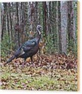 Strutting Turkey Wood Print