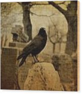 Study Of The Surly Raven Wood Print