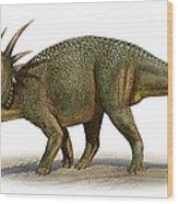 Styracosaurus Albertensis Wood Print