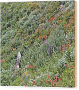 Subalpine Wildflowers Wood Print