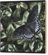 Subdued Butterfly Wood Print