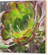 Succulant In Light Wood Print