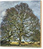 Suffolk Winter Landscape Wood Print