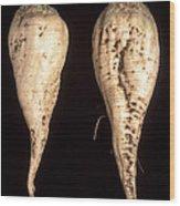 Sugar Beet Breeding Wood Print