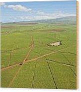 Sugar Cane Fields Wood Print