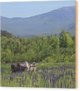 Sugar Hill Horse Tour And Lupines Wood Print