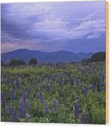 Sugar Hill Lupines Thunderstorm Clearing Wood Print