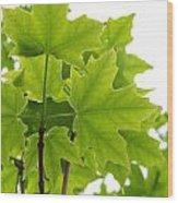 Sugar Maple Leaves Wood Print
