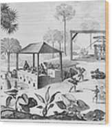 Sugar Production In The West Indies Wood Print