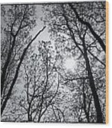 Sugarloaf Wood Print