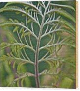 Sumac Frond Wood Print