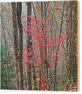 Sumac In Morning Light At Cumberland Falls State Park Wood Print