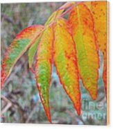 Sumac Leaves After The Rainfall Wood Print