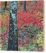 Sumac Slope And Lichen Covered Tree Wood Print
