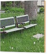 Summer Bench And Dandelions Wood Print