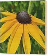 Summer Black Eyed Susan Flower Wood Print