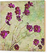 Summer Cosmos Wood Print