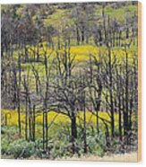 Summer Fields Of The Holy City Wood Print