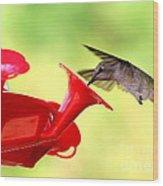 Summer Fun Hummingbird Wood Print