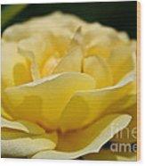 Summer Loves A Rose Wood Print