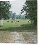 Summer Pasture Wood Print
