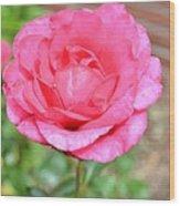 Summer Pink Rose Floral Wood Print