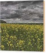 Summer Storm Clouds Over A Canola Field Wood Print