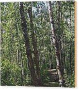 Summer Trail Wood Print