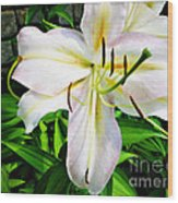 Summer White Madonna Lily Wood Print