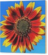 Summerflower Wood Print