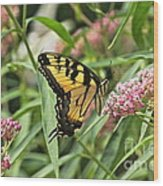 Summer's Flying Tiger  Wood Print