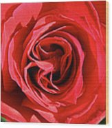 Summer's Red Rose  Wood Print