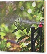 Summertime Refreshment Wood Print